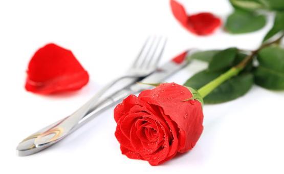 Rode roos, red rose